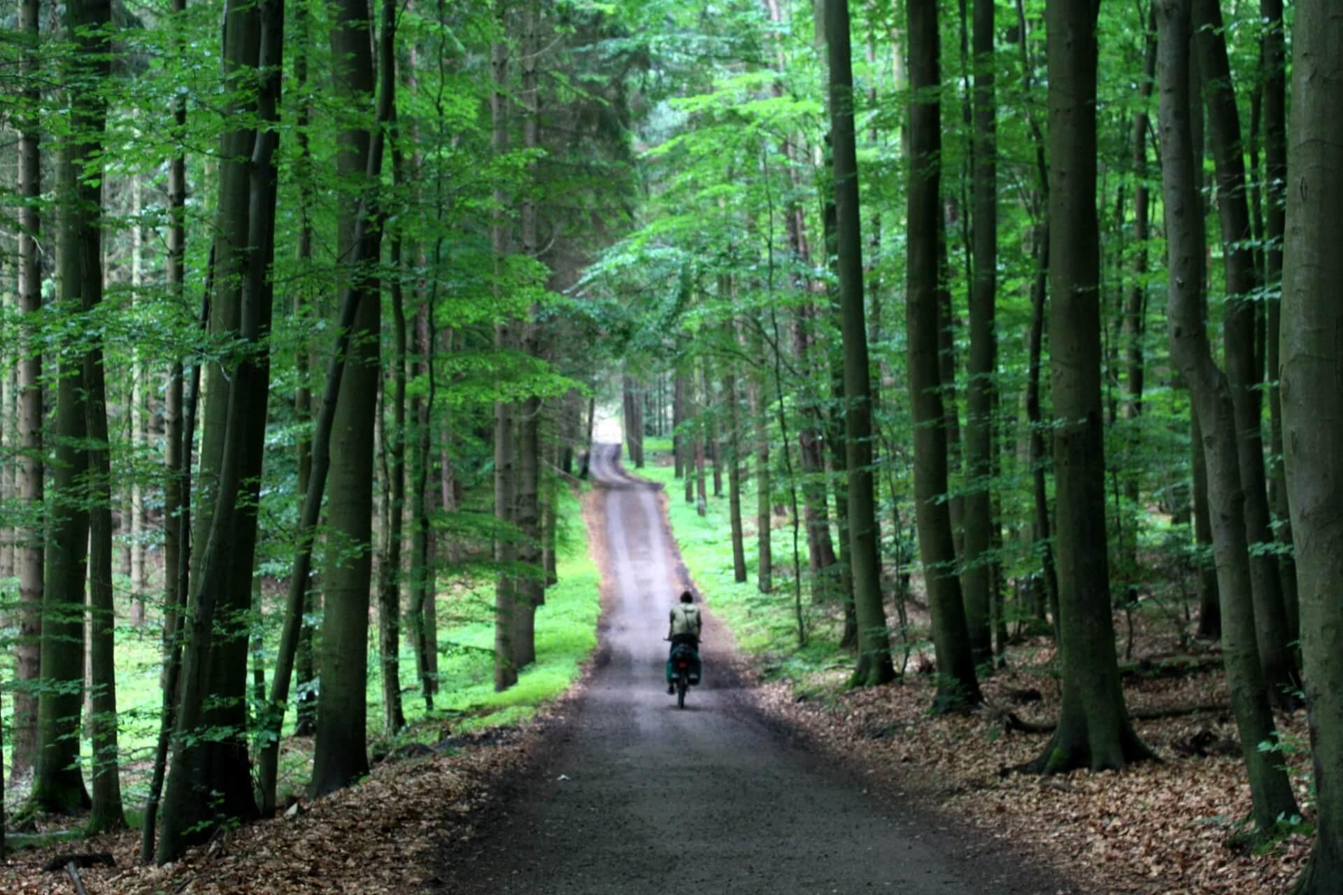 Przejazd rowerem przezWoliński park narodowy