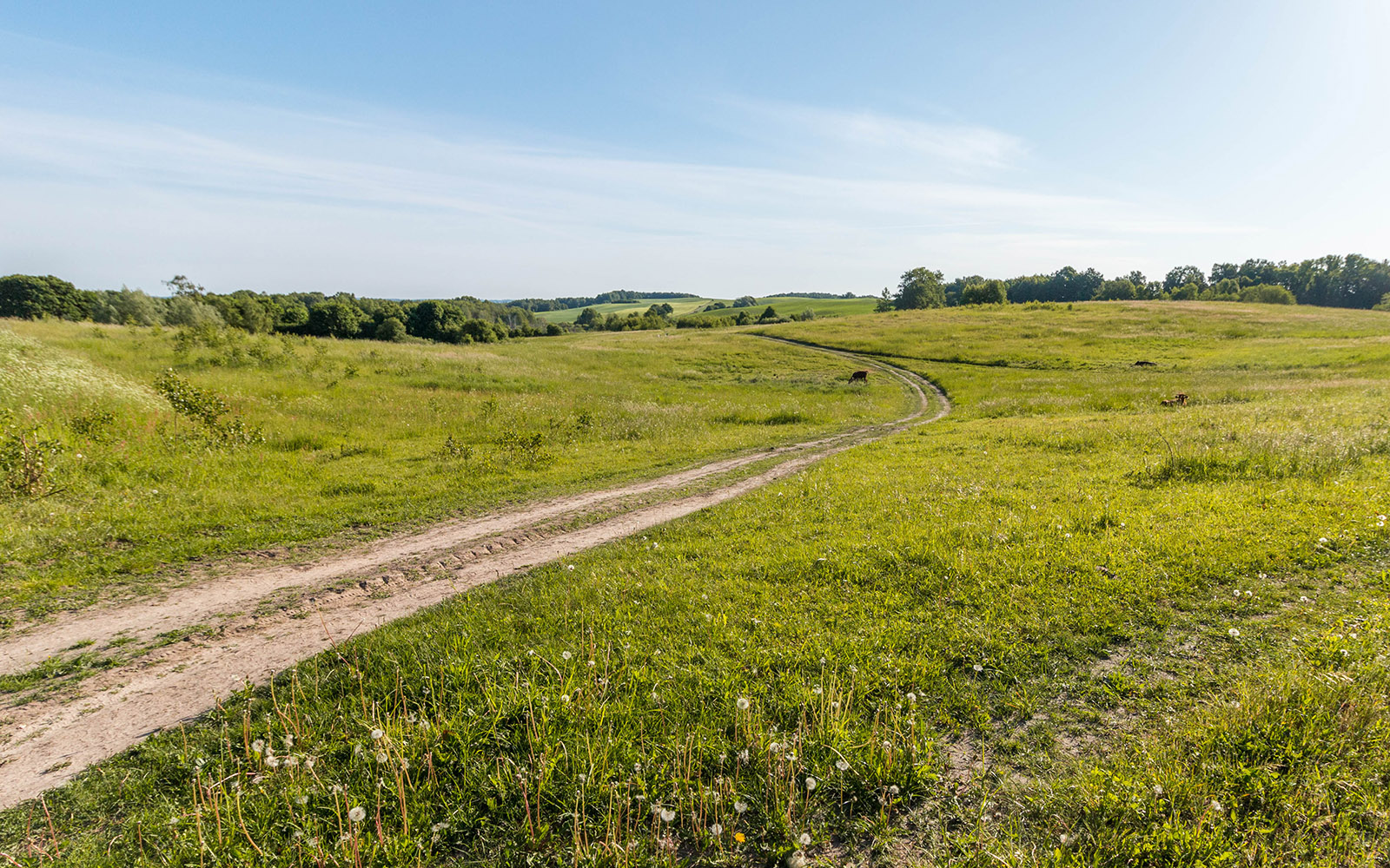 Krajobraz Drawskiego Parku Krajobrazowego koło Piaseczna
