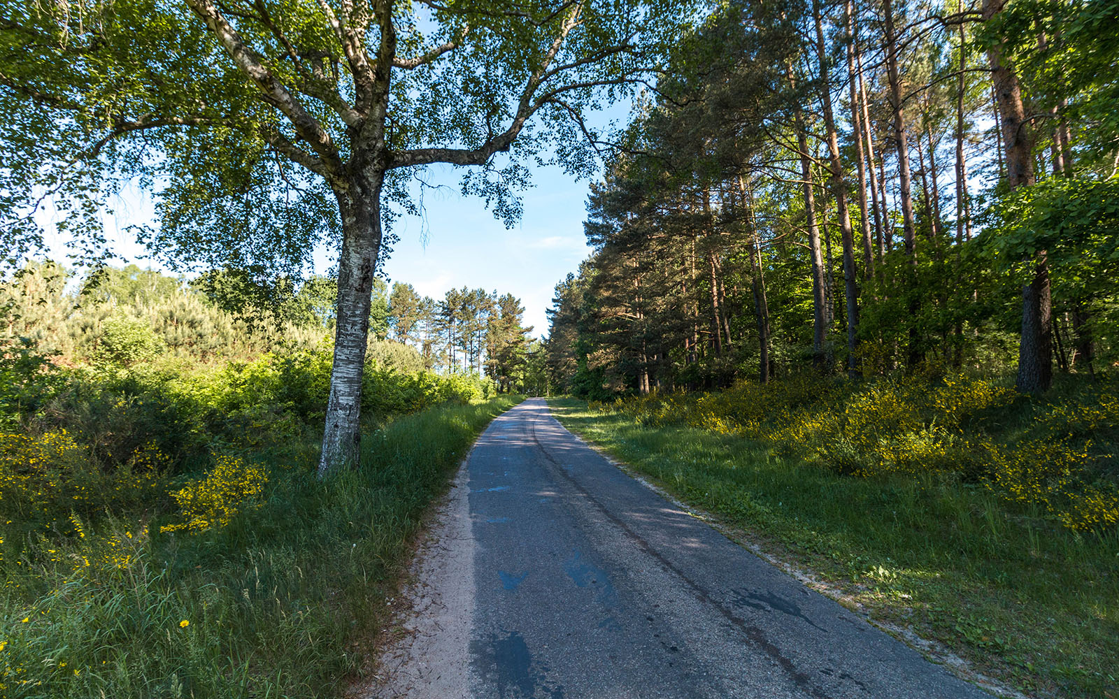 Droga Czarne wielkie wDrawskim Parku Krajobrazowym