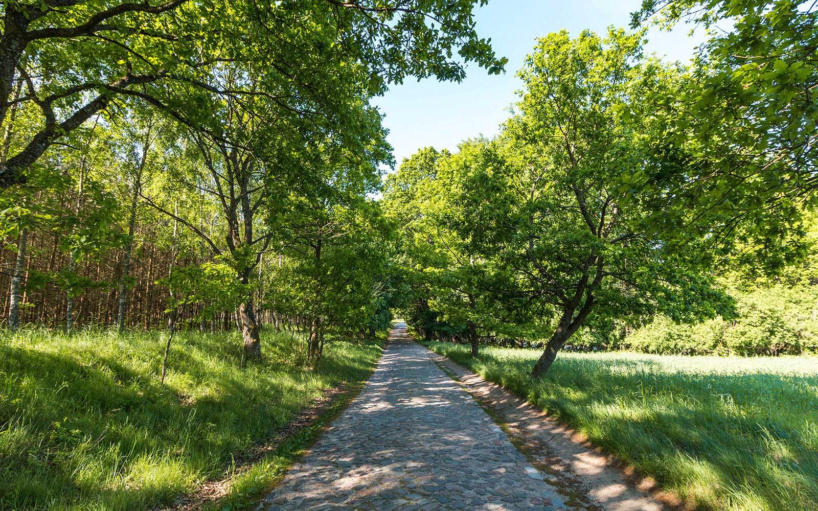 Zielony szlak wdrawskim parku krajobrazowym