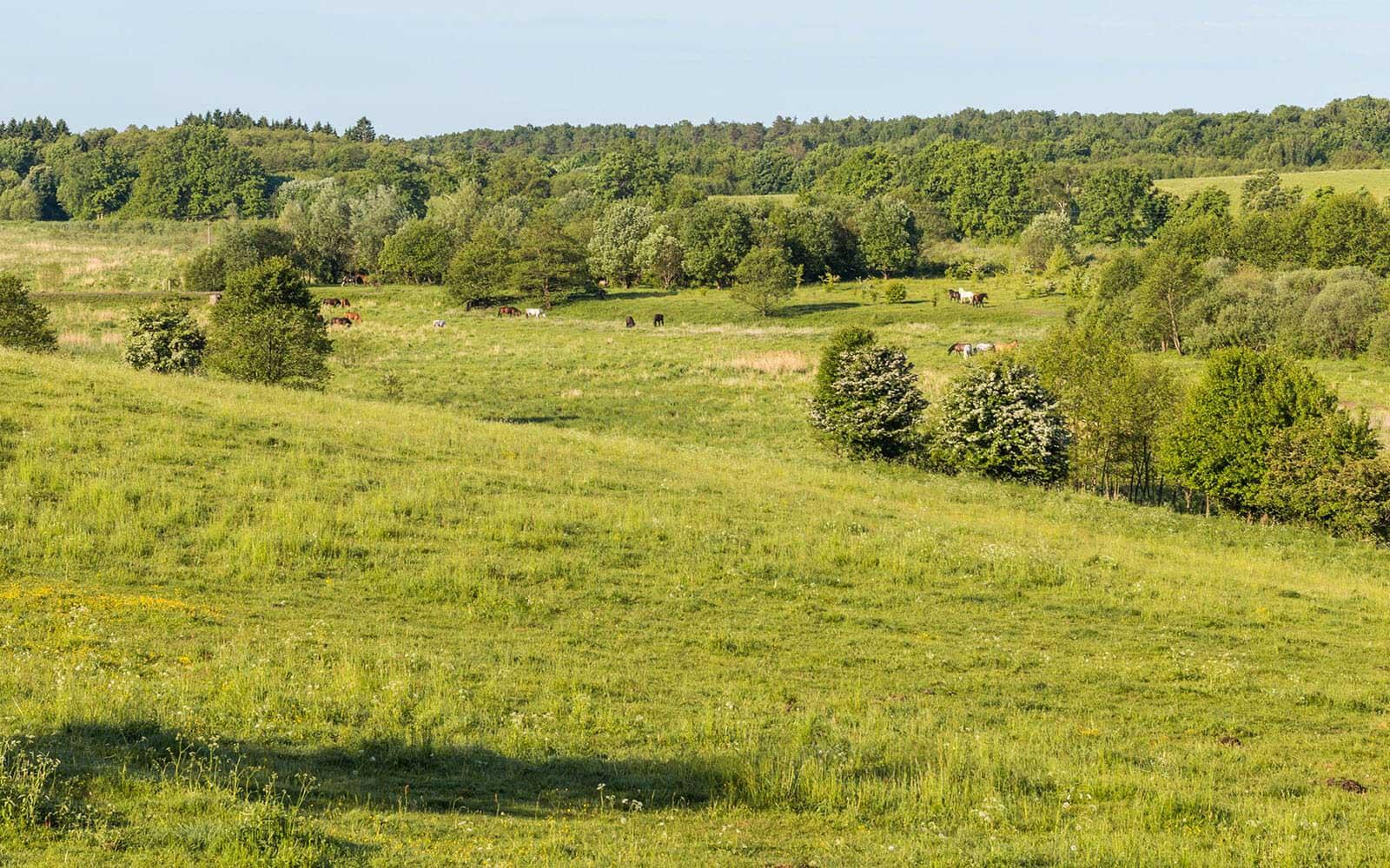 Krajobraz Drawskiego Parku Krajobrazowego