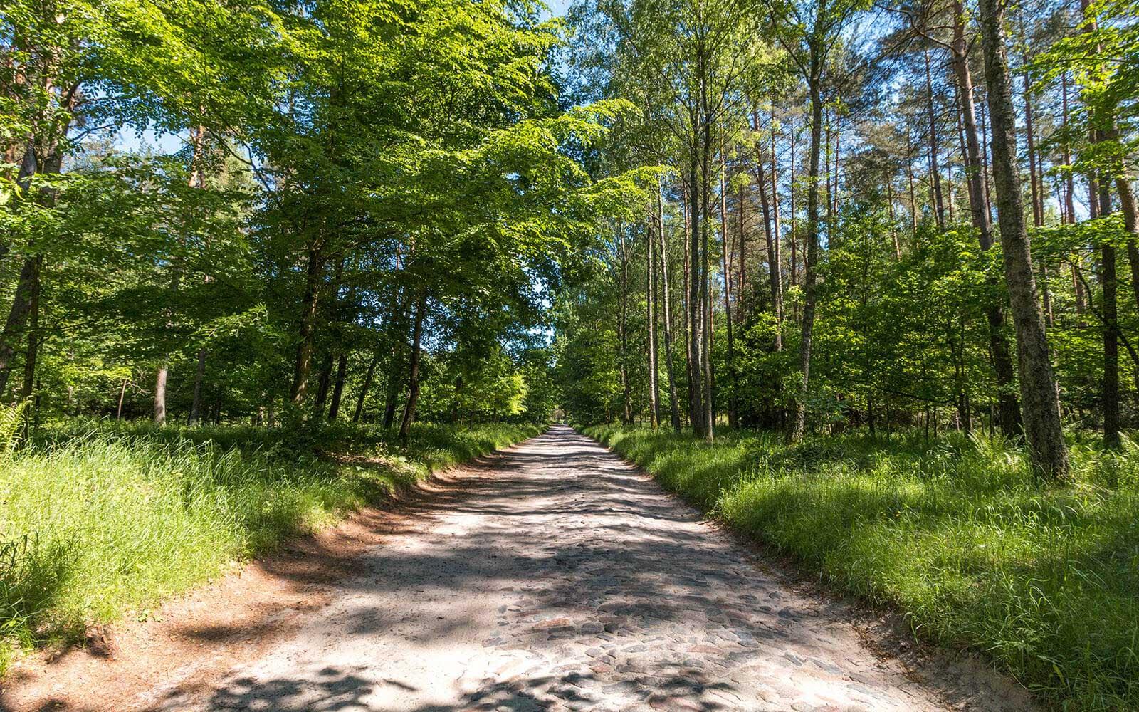 Droga wDrawskim Parku Krajobrazowym