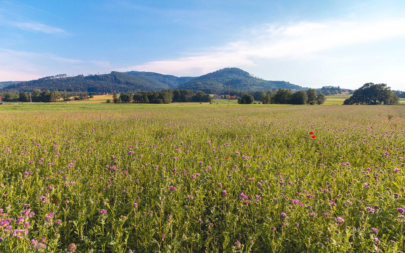 Krajobraz przyrody Brenna