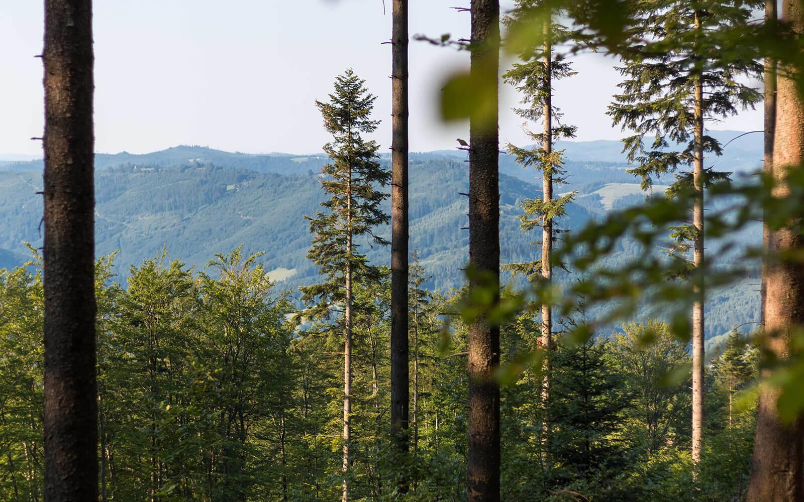 Widok zgór nainne góry