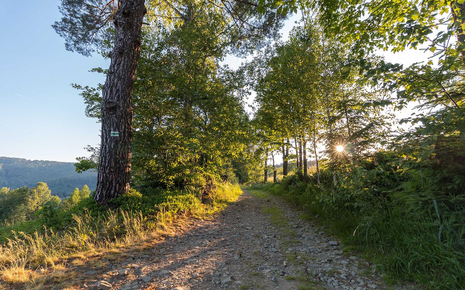 Zielony szlak turystyczny naBłatnie