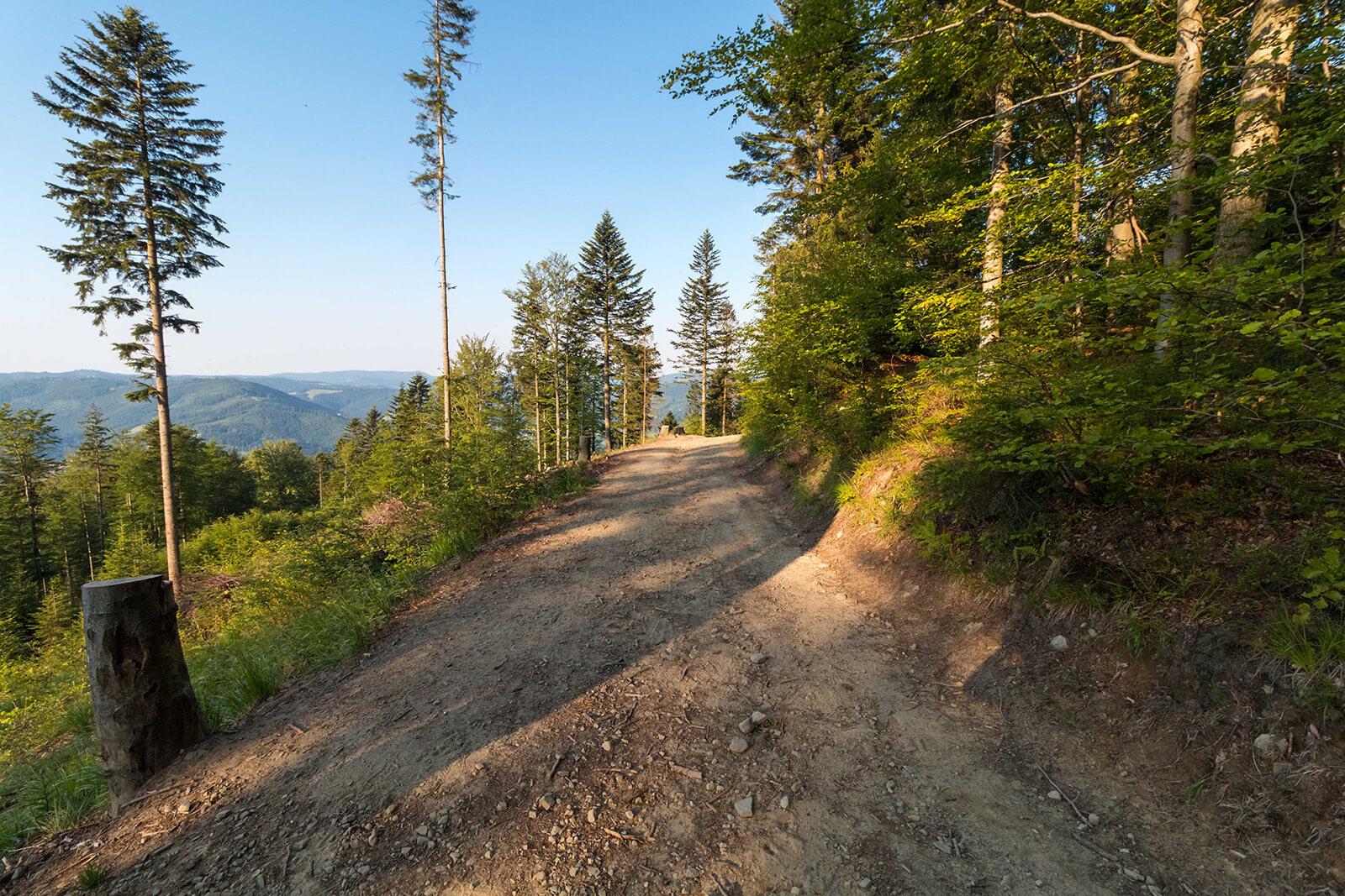Zielony górski szlak pieszy wBrennej