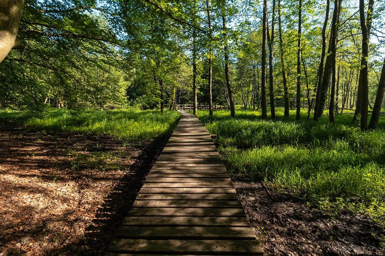 szlak pieszy drawienski park narodowy