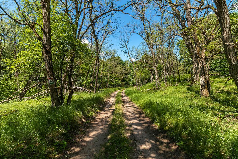 Zielony szlak wdrawieńskim parku narodowym