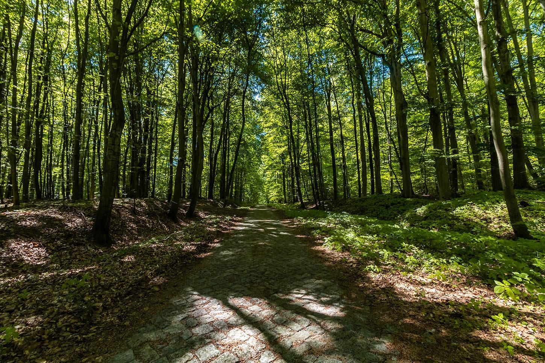 szlak rowerowy drawieński park narodowy