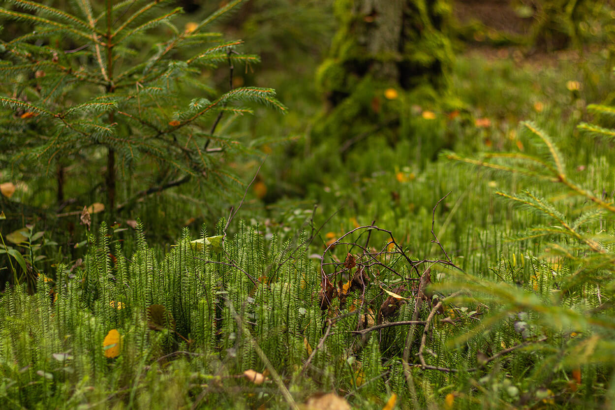 Park Narodowy Bory Tucholskie Bioróżnorodność