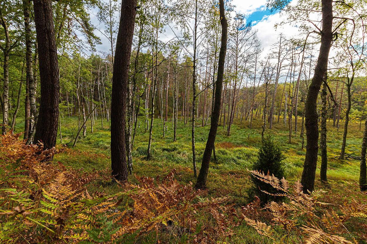 Krajobraz Bory Tucholskie