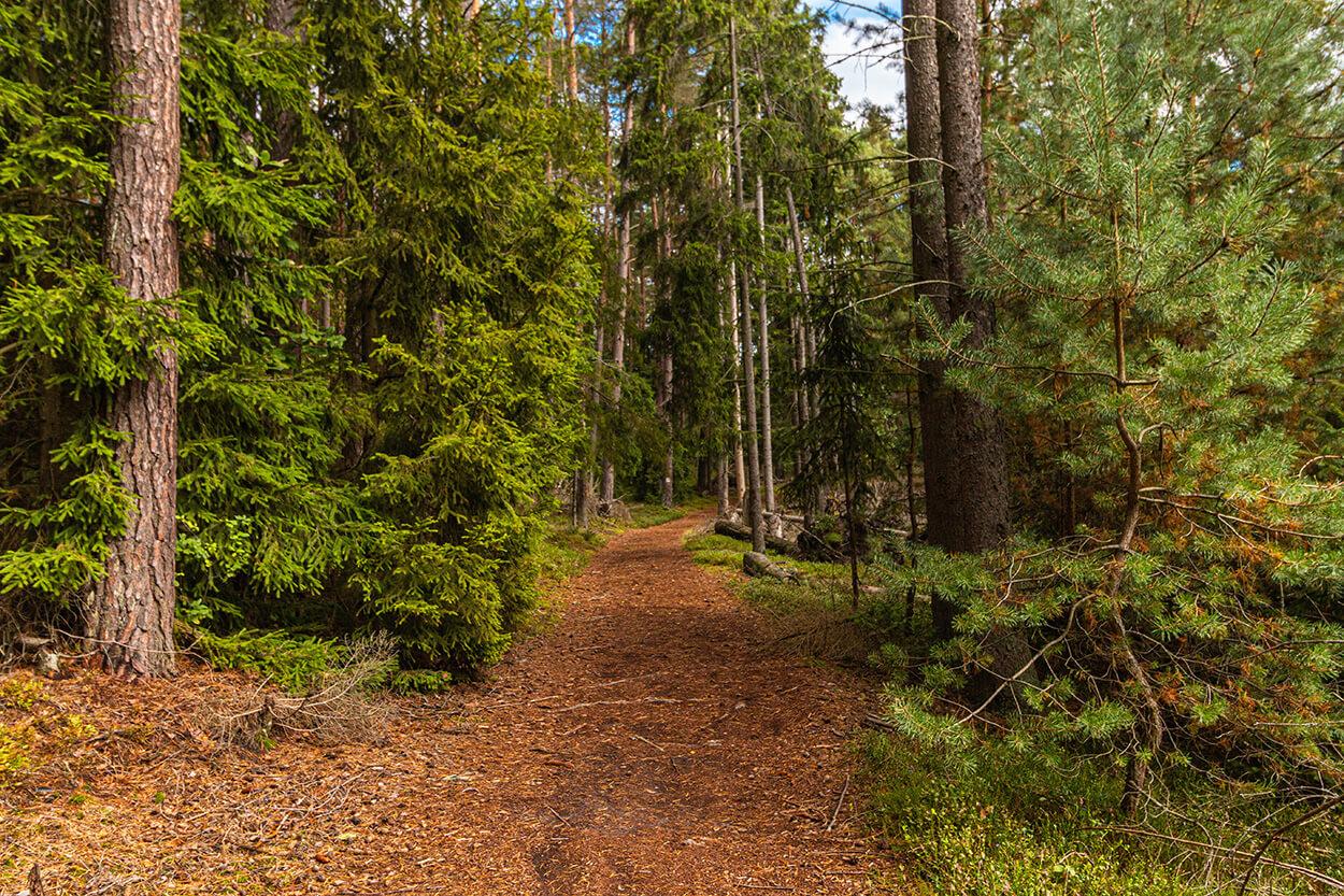Szlaki Park Narodowy Bory Tucholskie