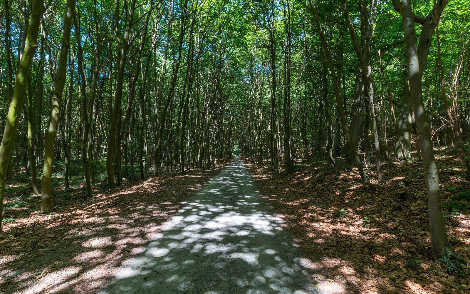 Nadmorska ścieżka rowerowa nawyspie Uznam